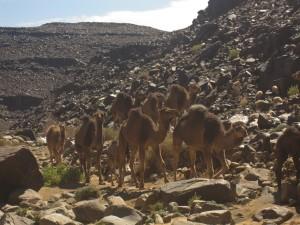 Marokko-228-300x225 in Trekkingtour durch den Jebel Saghro