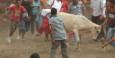 Am ersten Tag ging es weniger wild zu: kleinere Stiere und Kinder und Jugendliche in der Arena