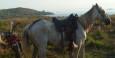 In Nicaragua ist das Pferd ein übliches Fortbewegungsmittel und wird auf den Parkplatz neben das Motorrad gestellt