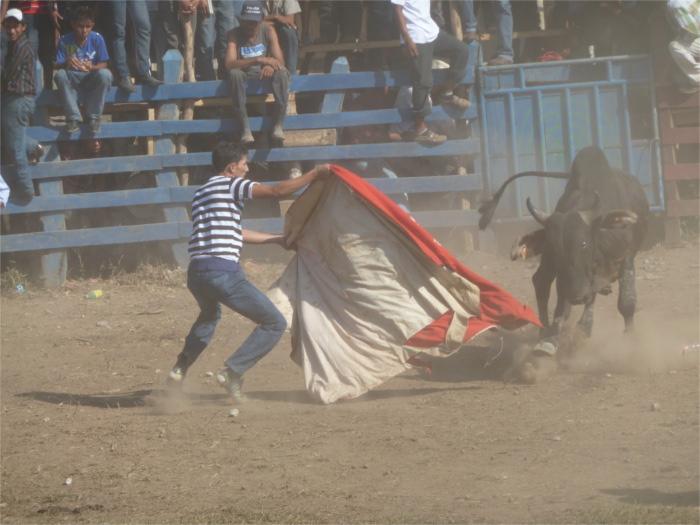 Wenn ein Stier rot sieht...